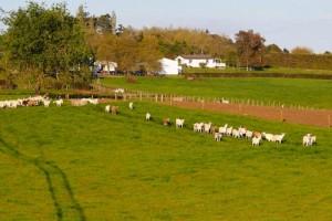 新西兰疫情升级全国停工,倍恩喜特批正常生产,保障奶粉供应